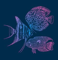graphic aquarium fishes set vector image