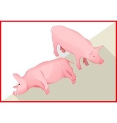 Pig isometric flat 3d vector image
