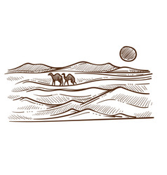 african desert with camels and barkhans or sand vector image