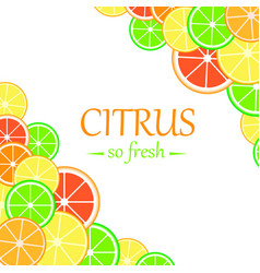 background with citrus fruits slices vector image