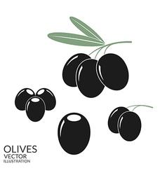 Black olives Set vector image