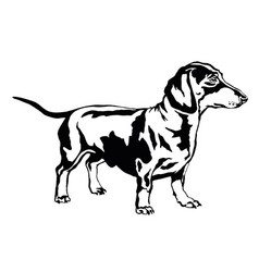 Decorative standing portrait of dog dachshund vector
