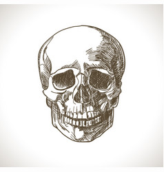 skull-sketch vector image