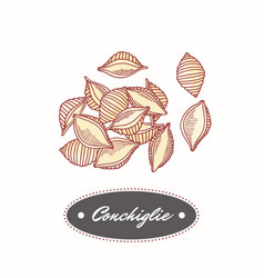 Hand drawn pasta conchiglie isolated on white vector