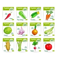 Vegetable food on card or sale tag labels vector image