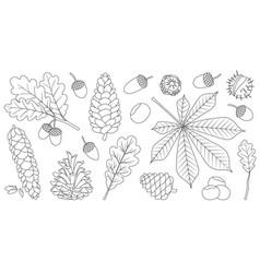 Acorn oak outline set icon vector