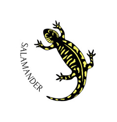 Hand drawn salamander in black and yellow color vector