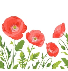 Poppies bouquet seamless border composition vector image