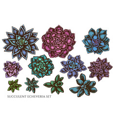 Set hand drawn colored succulent vector