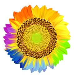 Sunflower with rainbow petals vector image