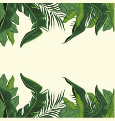 tropical leave palm tree image vector image