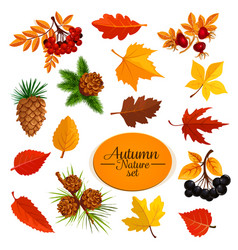 Autumn icons of leaf fall or forest berry vector