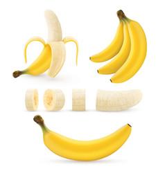banana fruit set bunches fresh tropical bananas vector image