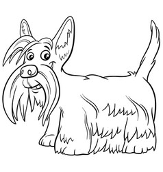Scottish terrier purebred dog coloring book page vector