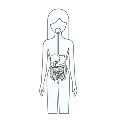 Sketch silhouette of female person with digestive vector