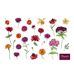 autumn blooming flowers on white background vector image