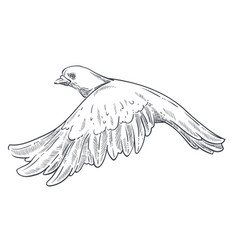 Dove or pigeon isolated animal sketch flying bird vector