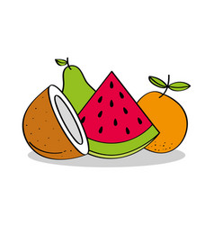 fruits coconut watermelon orange pear healthy food vector image