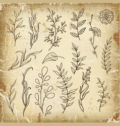 hand sketched floral design elements vector image