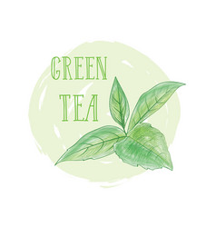Tea leaves herb label with lettering green tea vector