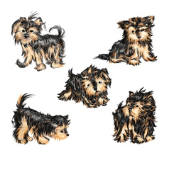 Yorkshire terriers vector