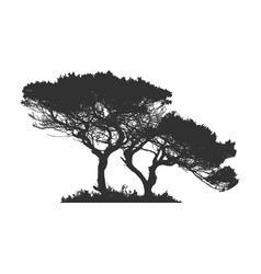 African tree in silhouette stock isolated on vector