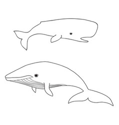 Cartoon sea whale and cachalot vector