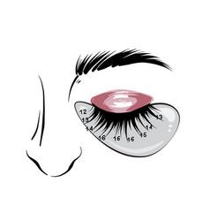 Eyelash mapping eyebrows microblading beauty vector