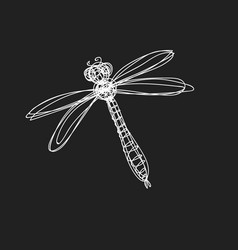 Hand drawn image dragonfly in continuous line s vector