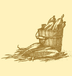 Harvest of corn cobs in an old wooden bucket vector