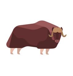 Musk-ox flat norway wildlife vector