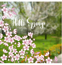 spring background with sakura vector image
