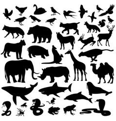 icons mammalian vector image vector image