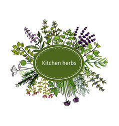 fresh kitchen herbs vector image