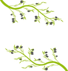 Olive on a white a background vector