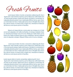 Vegetarian food fruit poster design vector image vector image