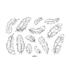 birds feathers hand drawn designer elements set vector image