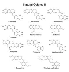 Chemical formulas of main natural opiates vector