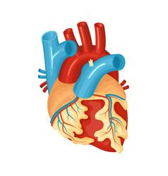 Diseased heart vector