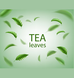 Green tea background realistic tea leaves whirl vector