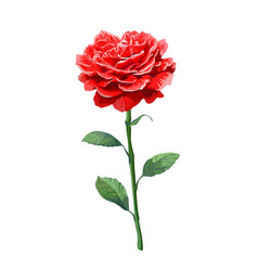 Image of red rose on stem isolated on white vector