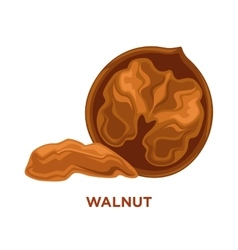 Walnuts isolated composition vector