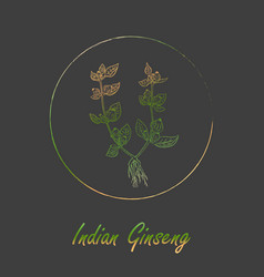 Indian ginseng plant with gradient in frame vector