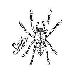 spider in zentangle style hand drawn doodle vector image