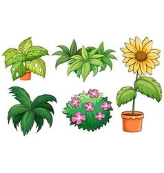 Flowerpots and plants vector image vector image