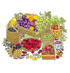 a lot fruits and berries in baskets vector image