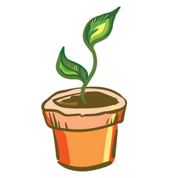 Plant in an orange pot or color vector