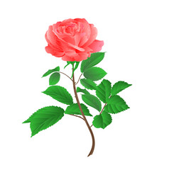 Rose flower pink twig with leaves vector