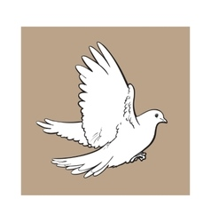 Free flying white dove isolated sketch style vector image vector image