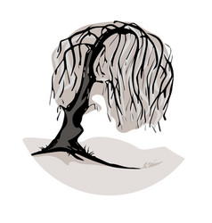 a weeping willow tree symbol vector image